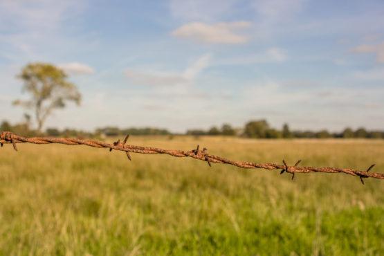 Foto Wümmewiesen