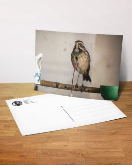 Postkarte - Stolz
