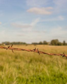 Fotografie einer sommerlichen Wiese. Im Vordergrund Stacheldraht, im Hintergrund ein einzelner Baum